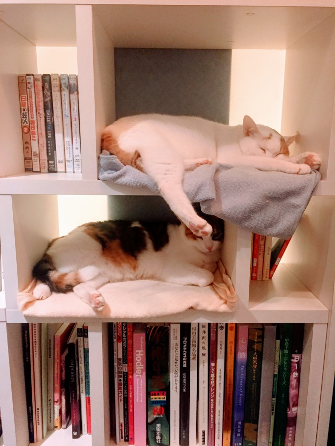 catcafe2-lostness-co-uk